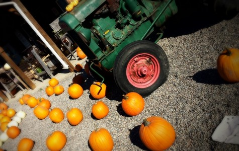 Pumpkins: Not Just for Carving
