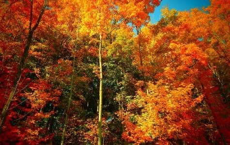 A Creative Look at Our Favorite Season: Fall