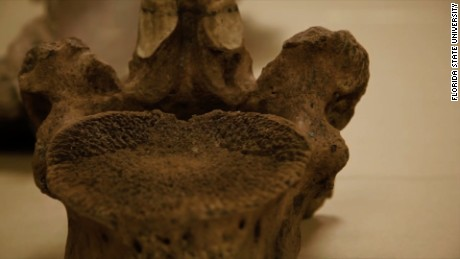 The Finding of Mastodon Bones Leaves Questions