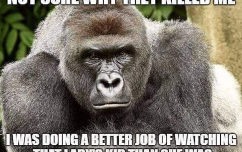 Who's To Blame For The Cincinnati Zoo Incident?