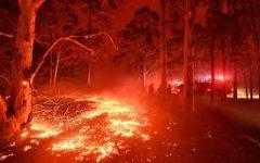 Australian Fires Will Leave Lasting Impact
